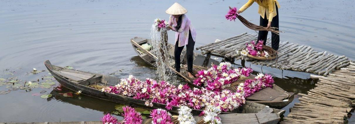 Flower Mekong River