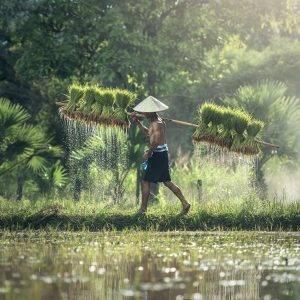 Natur Pur in Zentralvietnam