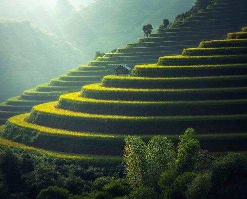 Reisfelder in Nordvietnam
