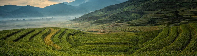 agriculture Vietnam
