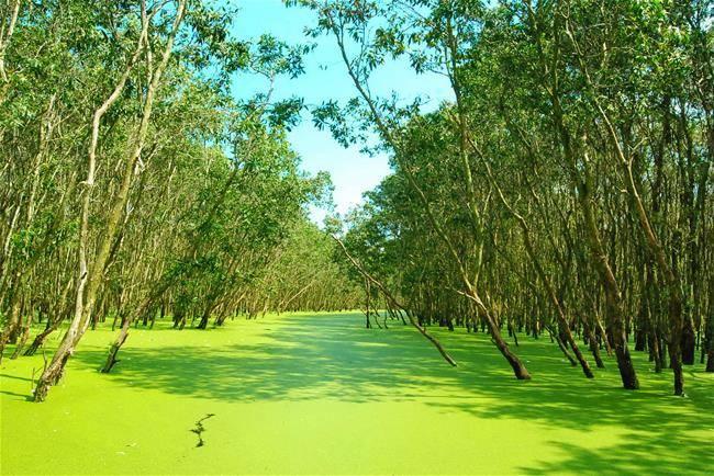 Chau Doc forest