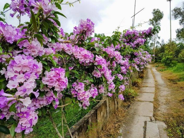 Blumen im Garten Mekong Delta