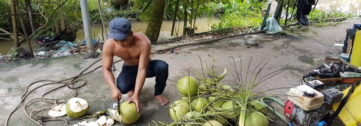 Men open Coconut in Mekong Delta
