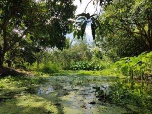 Homestay Green Garden Can Tho