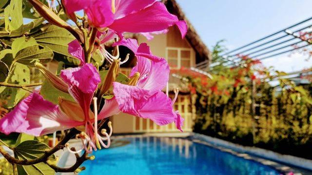 Flowers Swimmingpool