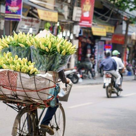 hanoi-flower