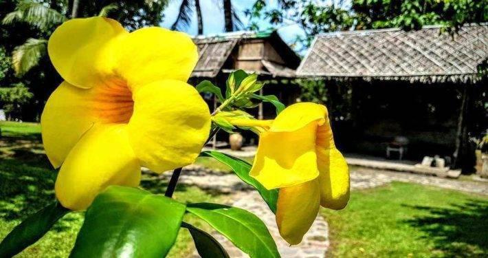 Binh Quoi Village Flowers